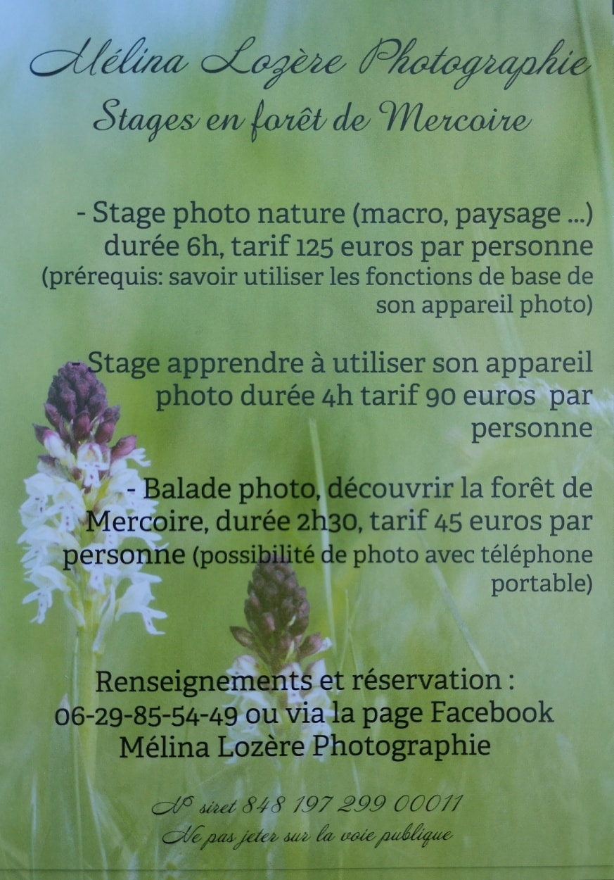 STAGE PHOTO EN FORET DE MERCOIRE